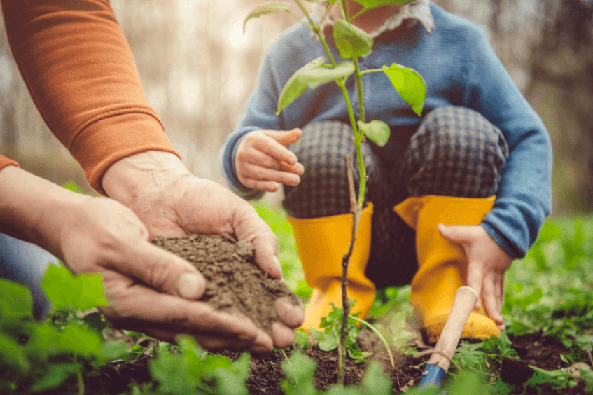 properly plant trees in your garden