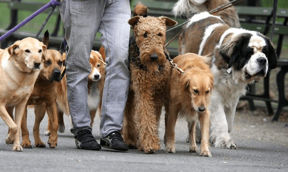 As the dog walking industry continues to grow in the UK, and indeed globally, as with any industry it also becomes more competitive.
